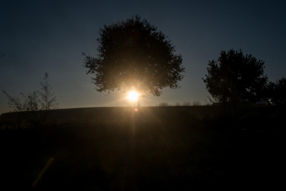 Birdgen am frühen Morgen