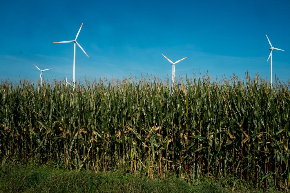 Maisfeld und Windräder